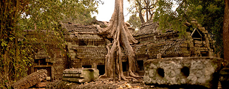 day 5.1 ta phrom temple angkor