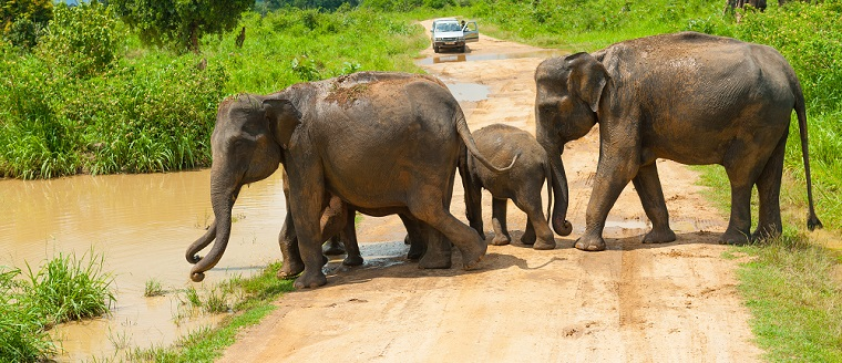 Sri Lanka Wildlife Highlights with Beach 1