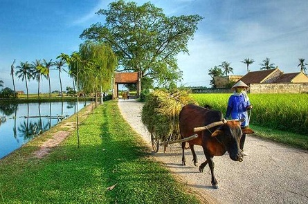 Vietnam Countryside s